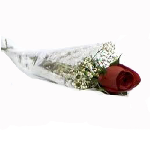 LONG STEM  SINGLE ROSE WRAPPED